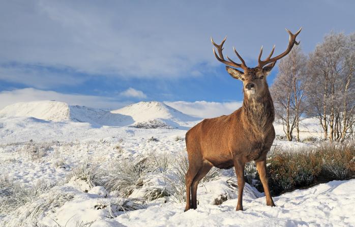 Scottish winter - 2
